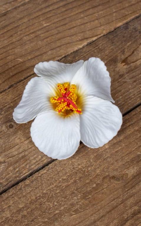 Pince à cheveux hibiscus Fleur dHawaii, blanch